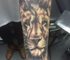 Lion Forearm